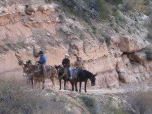 Mules take a break on Bright Angel Trail
