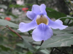 Flower in the Rain Forest