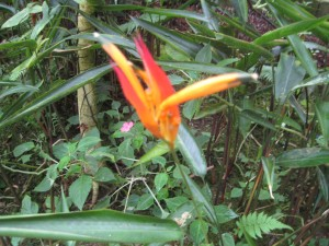 Beautiful Flower in the rain forest