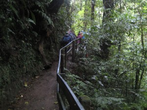On the trail in the rain forest