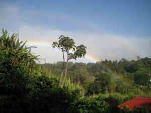 Rainbow at the Coffee Plantation