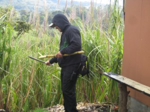 Jorge with machete cutting sugar cane