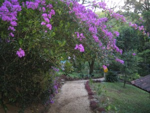 Beautiful flowers line a path at El Trapiche
