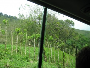 Forest on drive to Lake Arenal