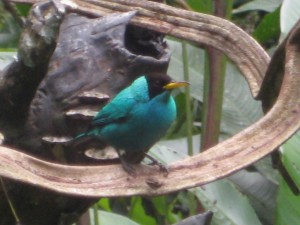 Bird watching at Eco Danaus