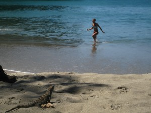 Iguana in foreground with beach girl in background