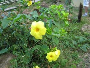 More La Tierra Divina Flowers