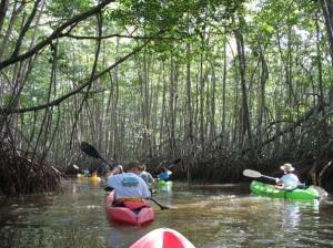A mangrove swamp